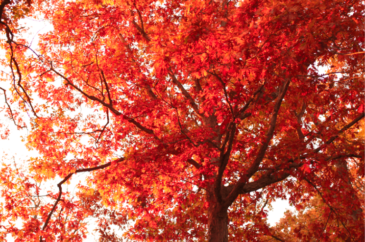 Autumnal Photo Essay